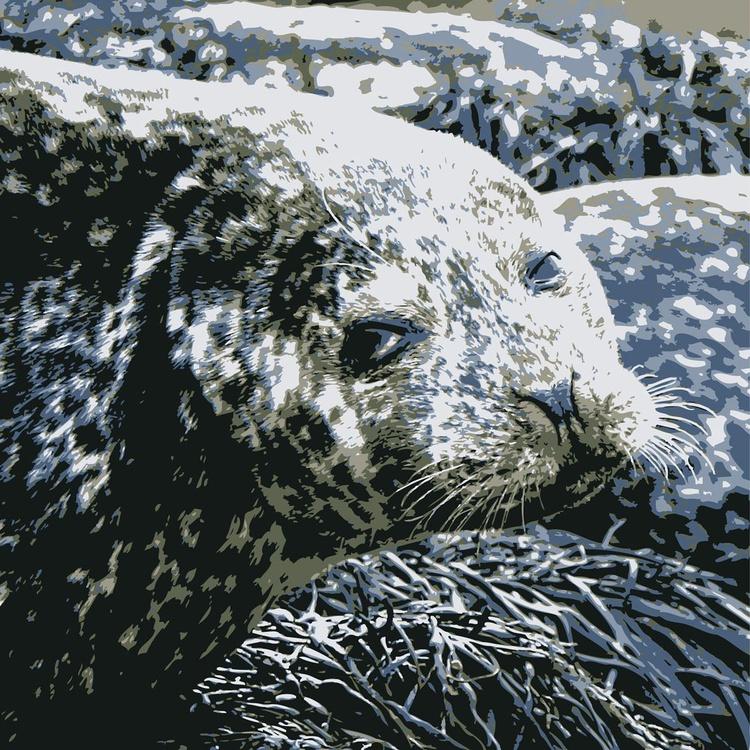 Seal#1 - Image 0