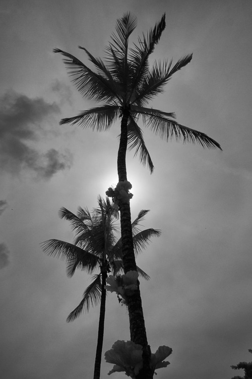Under the Palm Tree [#201402030] - Image 0