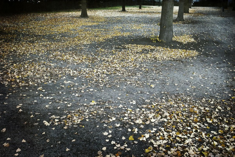 Yellow Leaves - Image 0