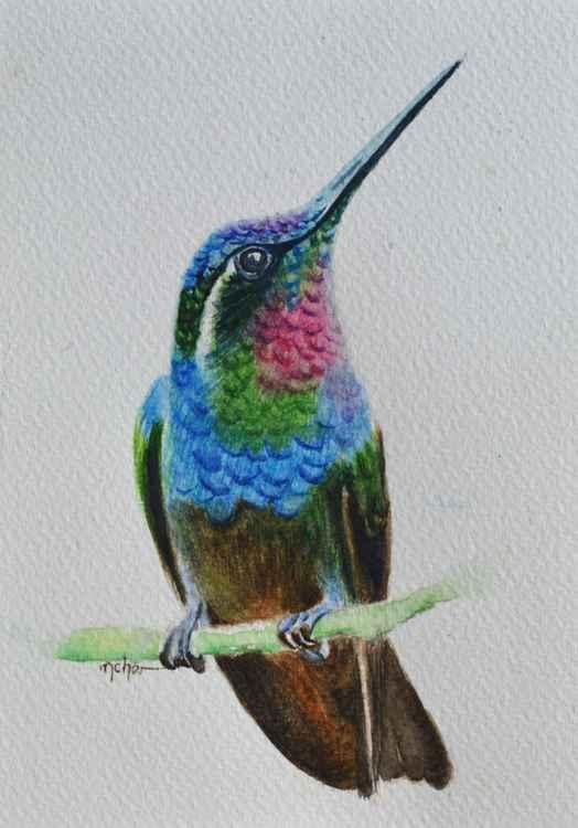 Humming Bird -