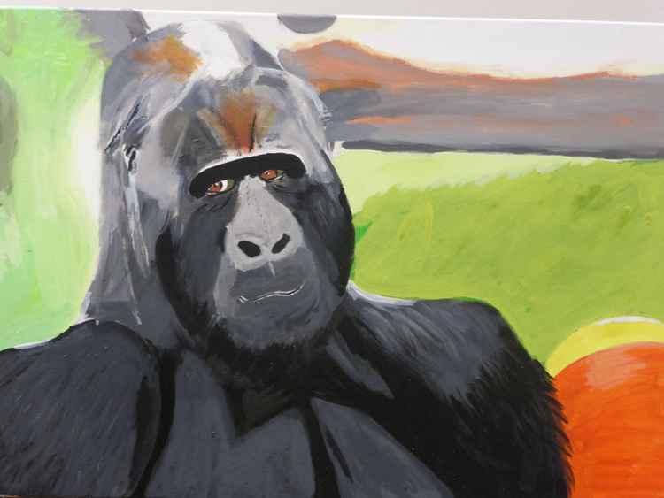 Gorilla -