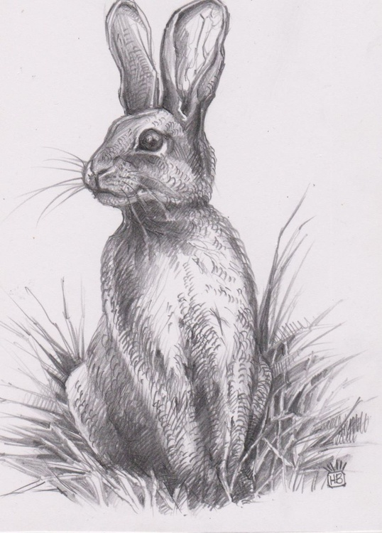 Bunny Number 2b - Image 0