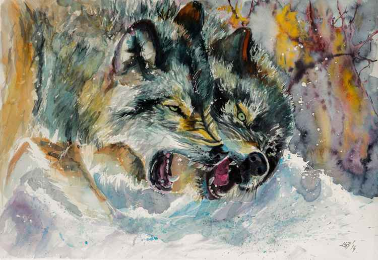 Wolves in snow -