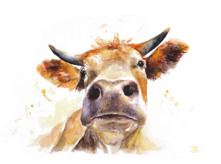 Cow -
