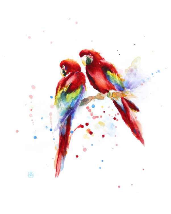 Parrots -