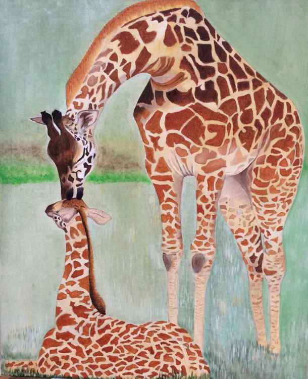 Giraffes a mothers love -