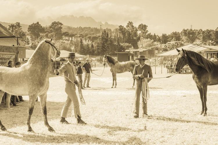 Tarifa Horse Festival 1. - Image 0