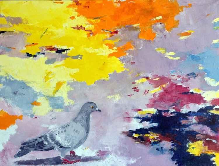 Pigeon -