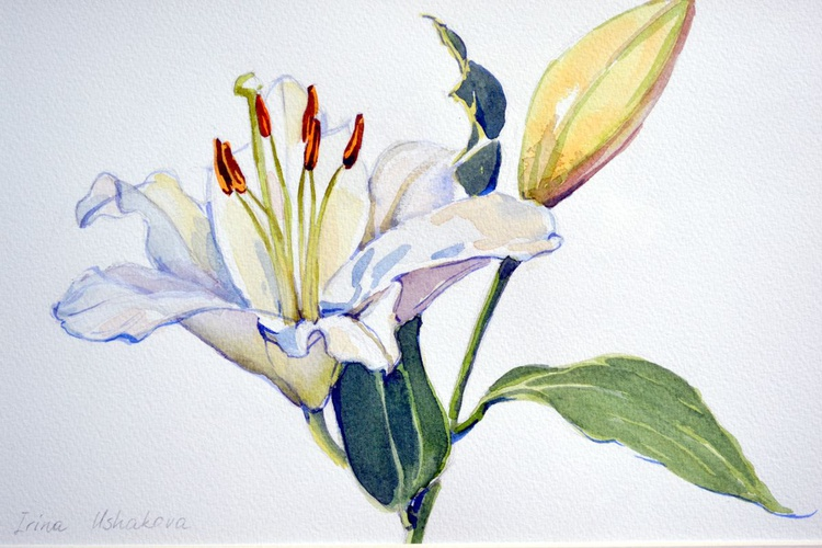 Lily 4 - Image 0