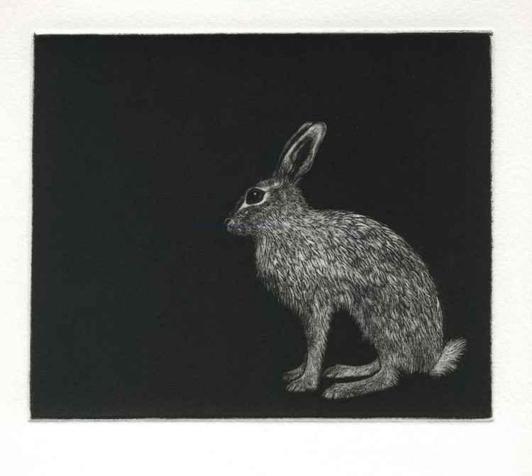 Winter Hare (Mezzotint) -