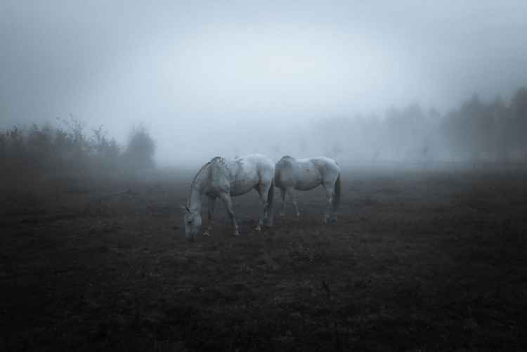 Lost in Fog - Vogue Italia Published -