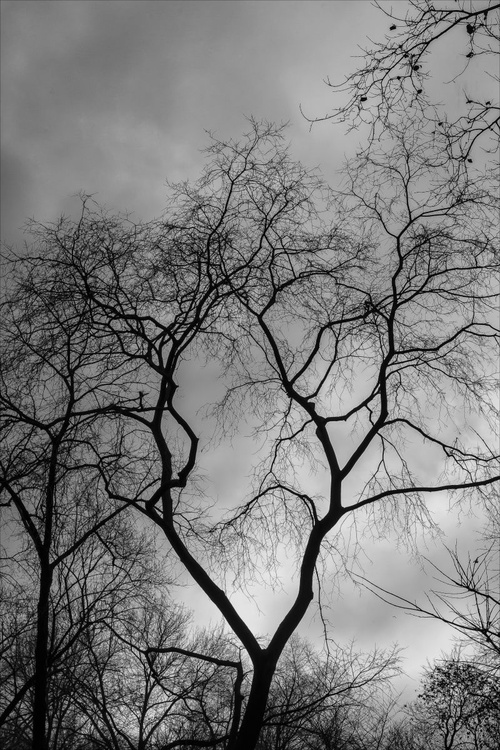 Winter Trees - Image 0