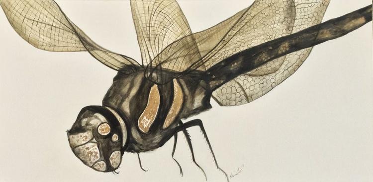 Dragonflying-bye - Image 0