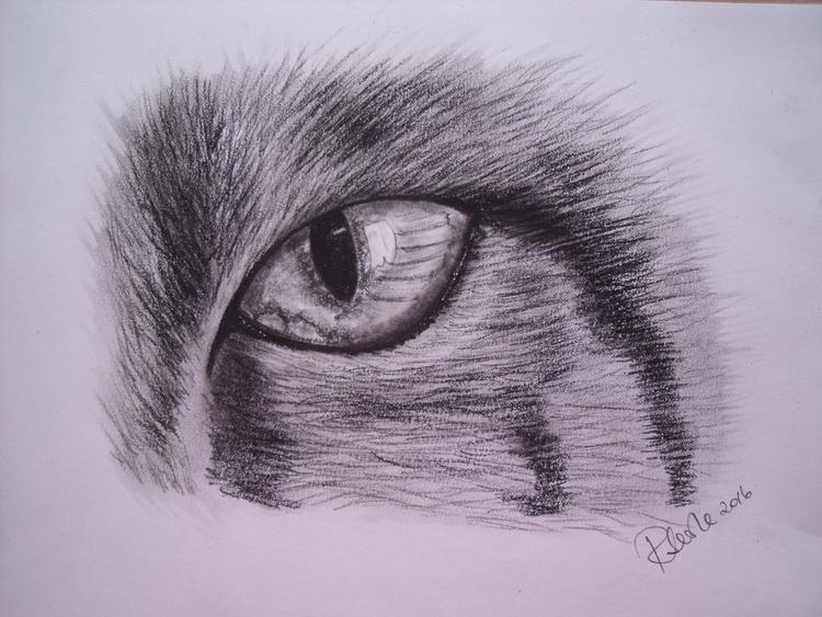 Cat's Eye - Image 0