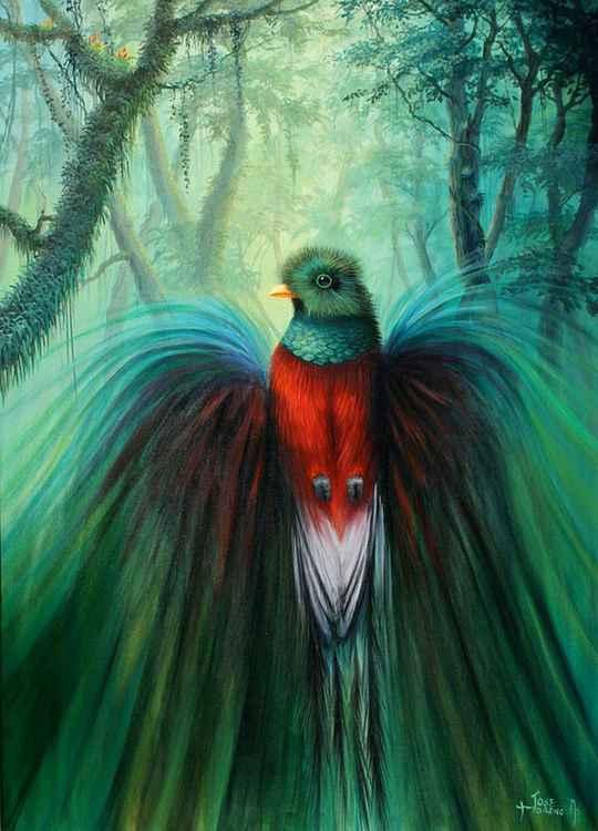 Espíritu de Selva / Forest Spirit
