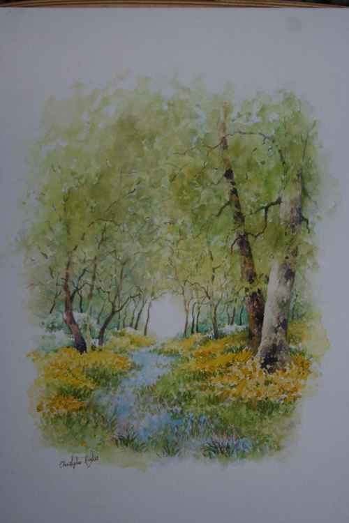 Bluebells and Daffodils -