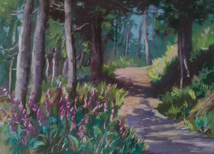 Woodland walk -