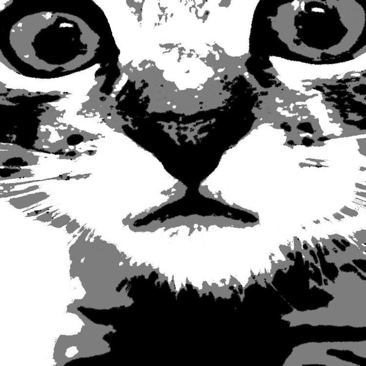 The Kitten - Image 0