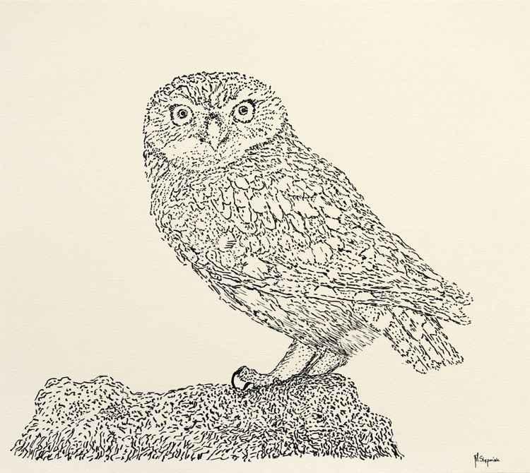 The little owl (Athene noctua) -