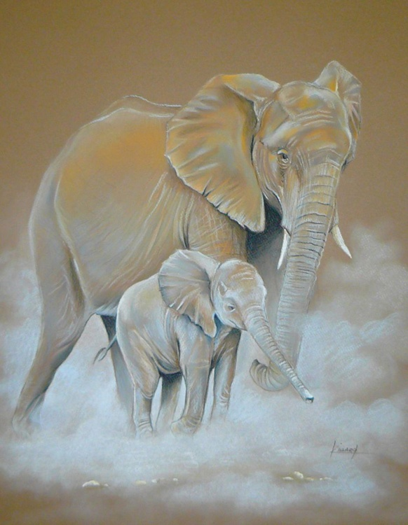 Elephants - Image 0