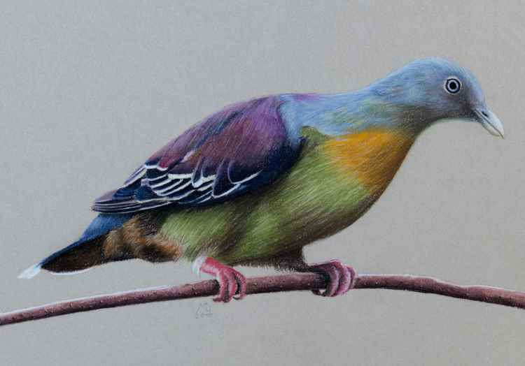 "Original pastel drawing ""Little green pigeon"""