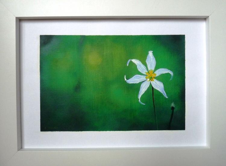 White Starflower - Image 0