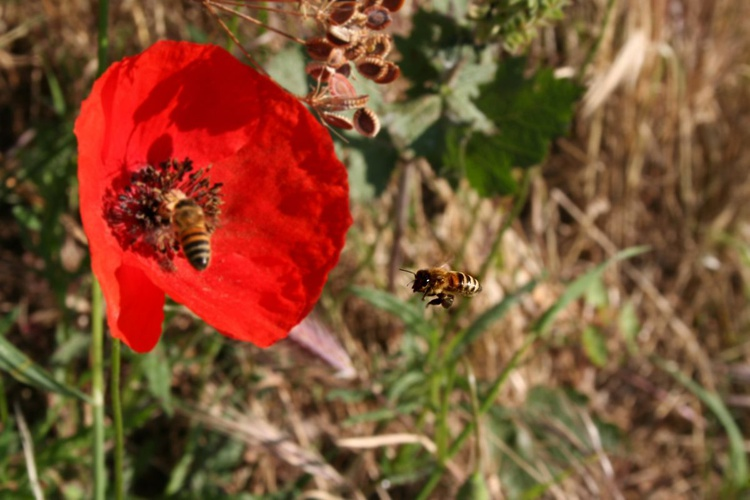 This Morning is there a free poppy for me? - Image 0