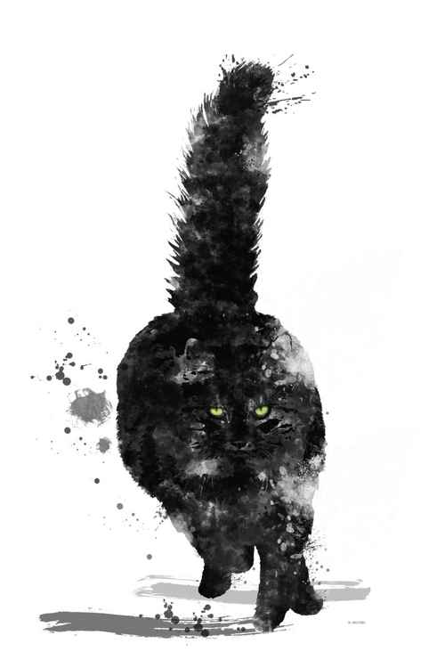 Black Maine Coon -