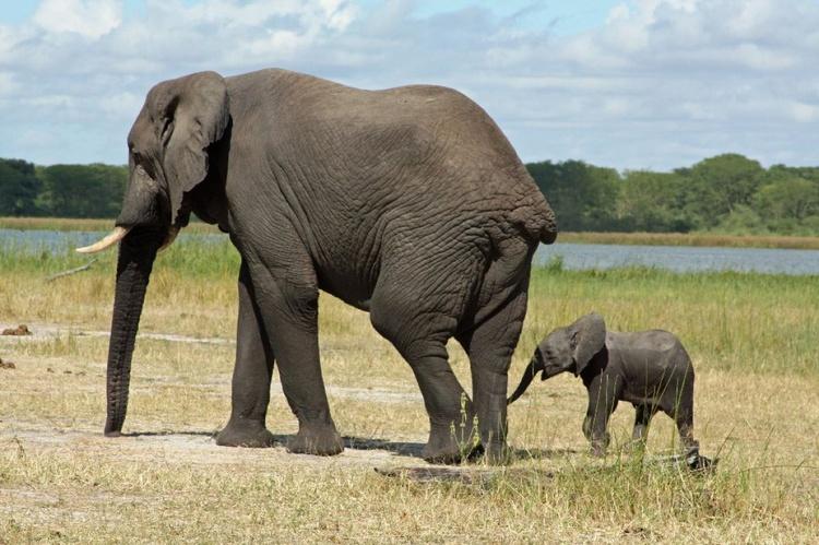 Malawi Safari II - Image 0