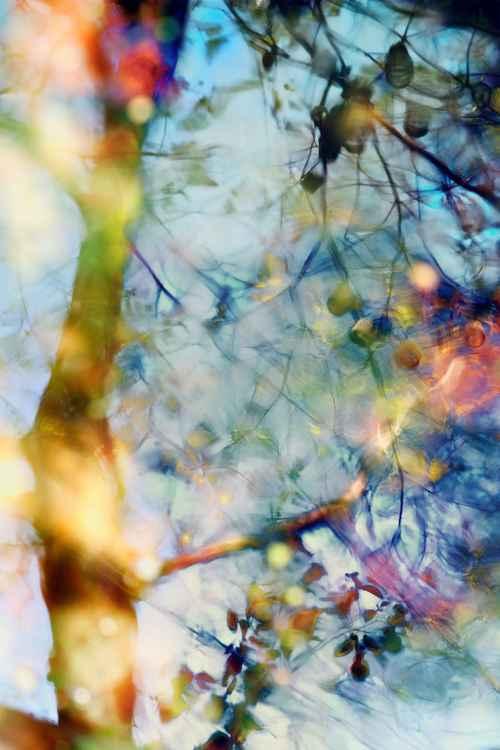 """""""Pond Reflection"""" #5"""