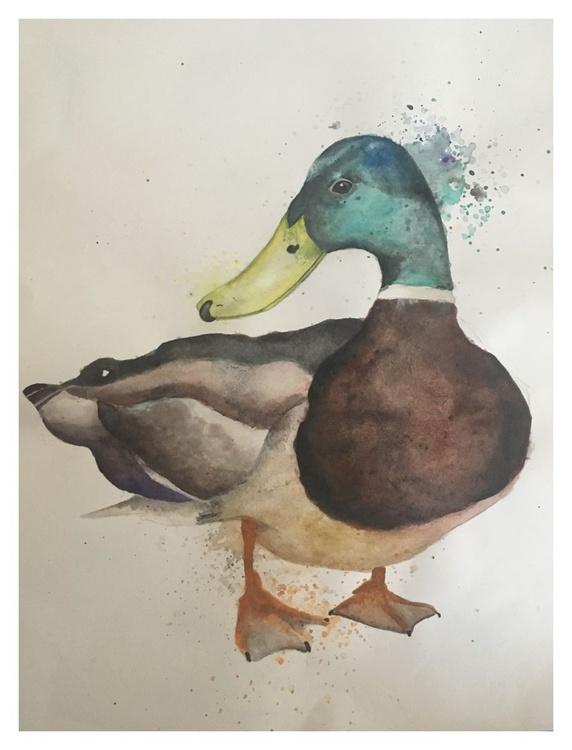 Duck - Image 0
