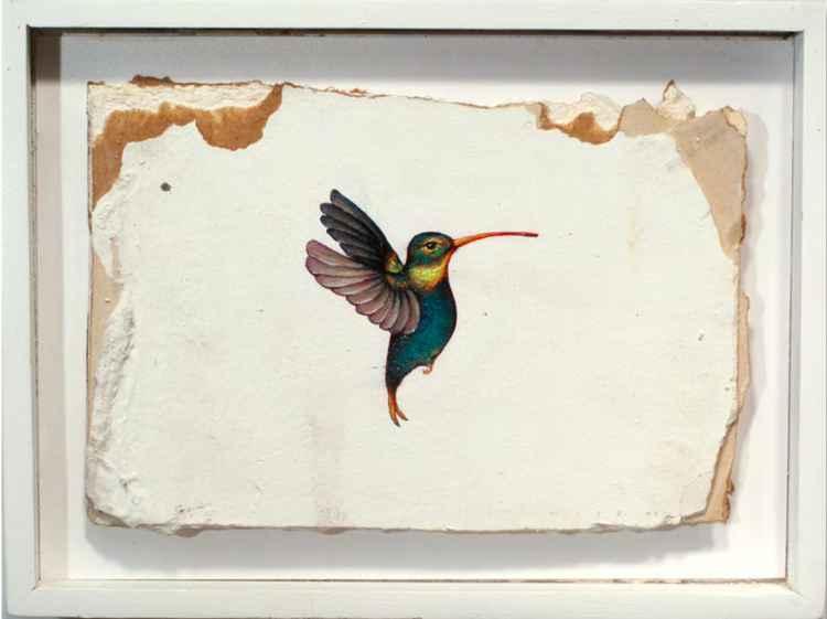 'Humming Bird Fragment #10'
