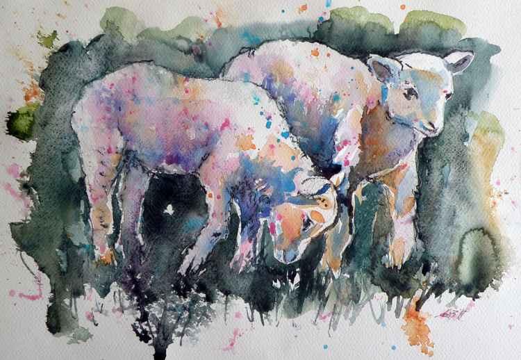 Sheep -