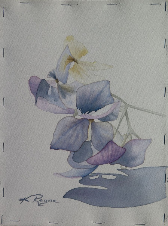 Dried Hydrangea II - Image 0
