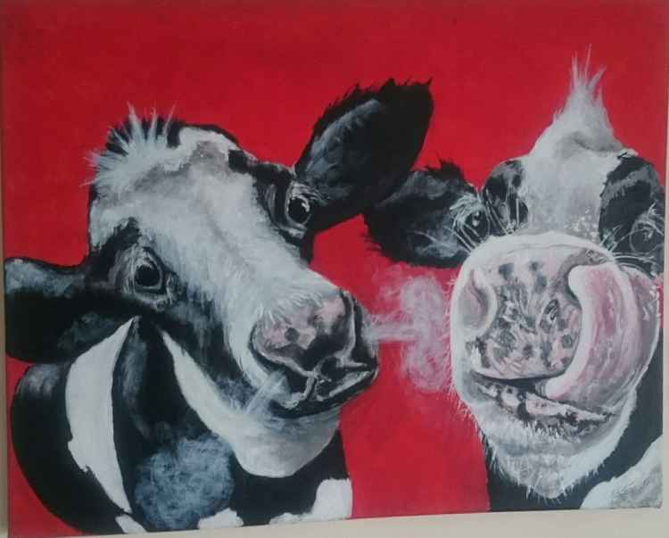 'Silly cows' -