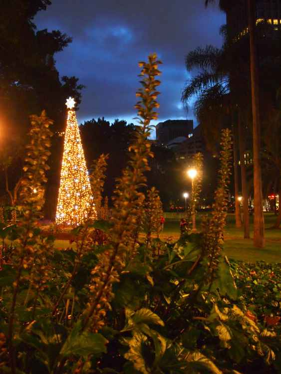 Sydney Hyde Park at Christmas -