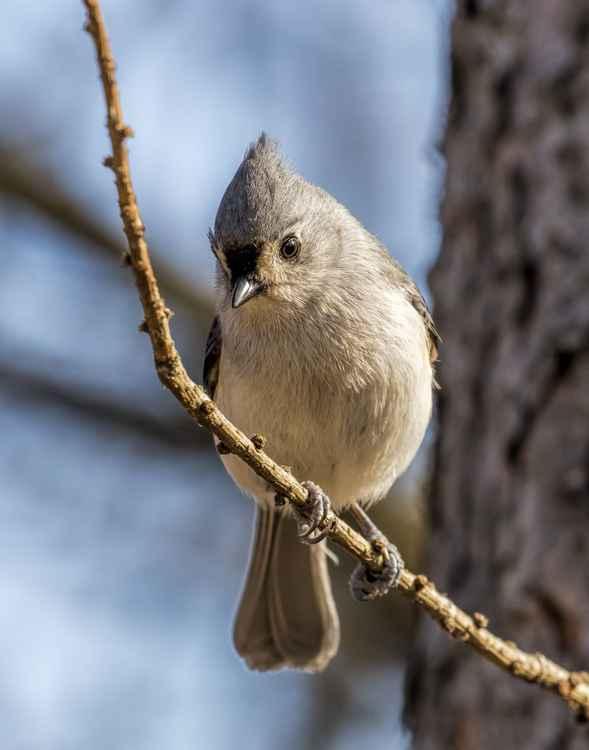 Pretty Bird -
