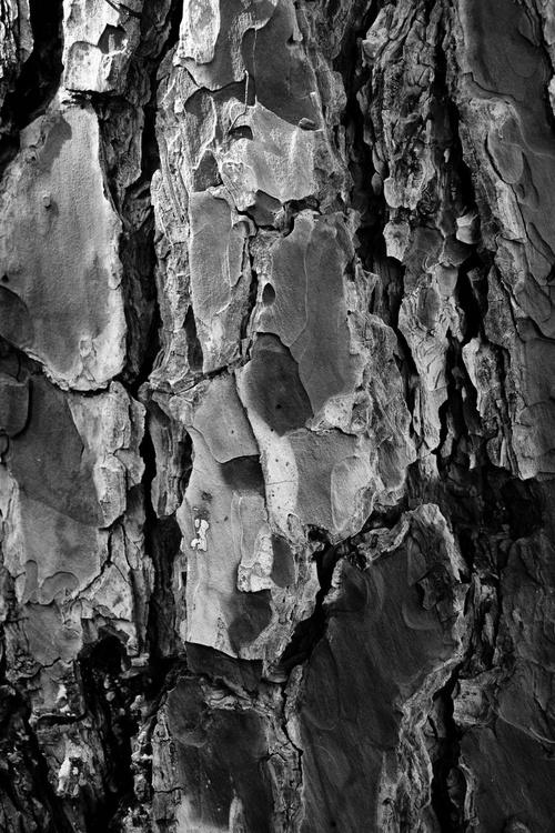 """Tree Bark 2015 1"" - Image 0"