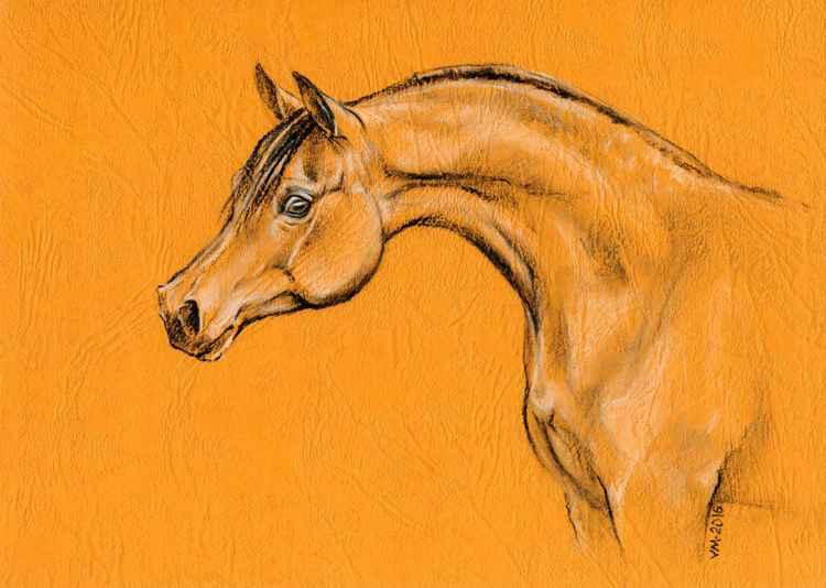 Arabian horse -