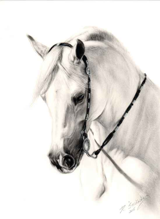 White Arabian -
