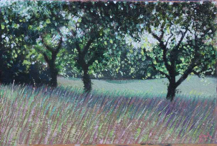 Field by the path (#11 Postcards from Pembrokeshire) -