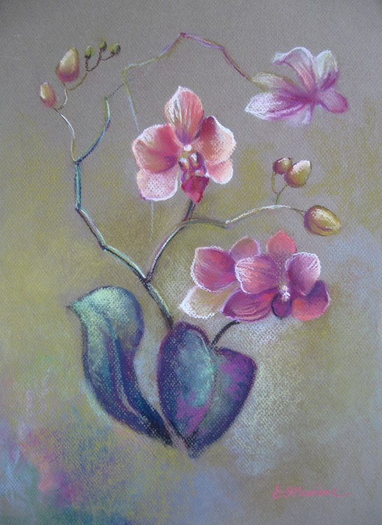 Orchid - Image 0