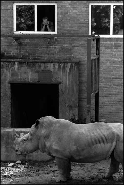 Observing the Rhino at Zoo Praha -
