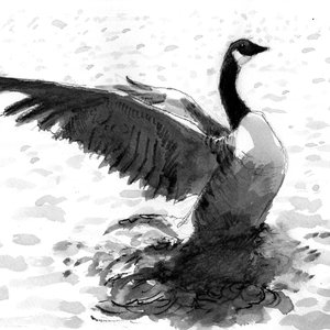 Flapping goose by Tom Ledger