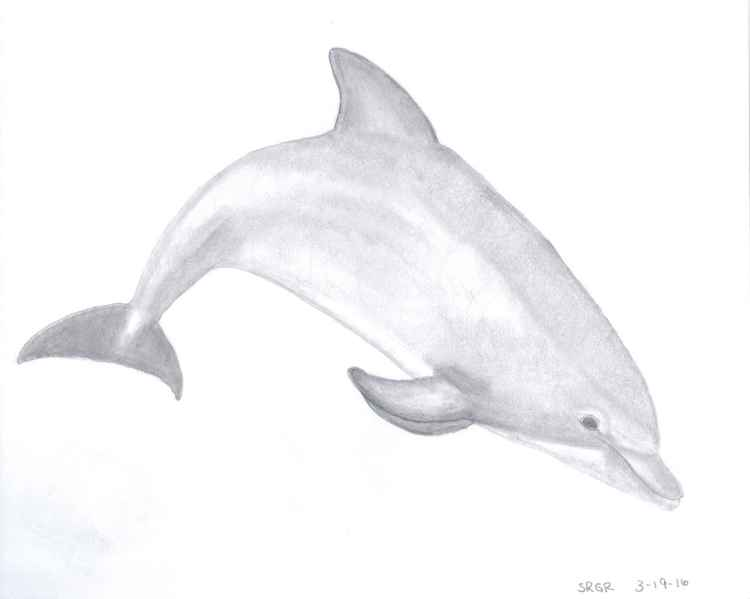 0014 Dolphin 03 Drawing