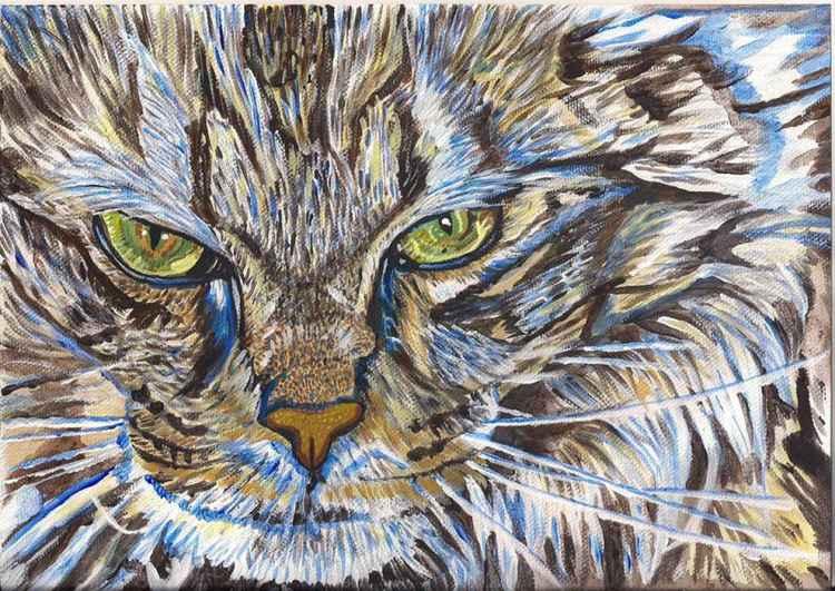 Cat Eyes -