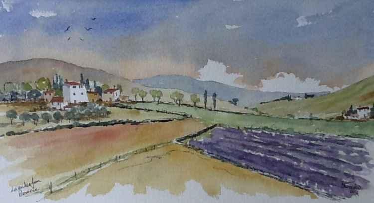 Lavender in Provence -