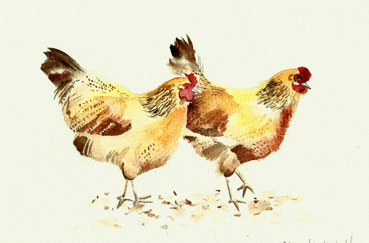 Two hens - Image 0