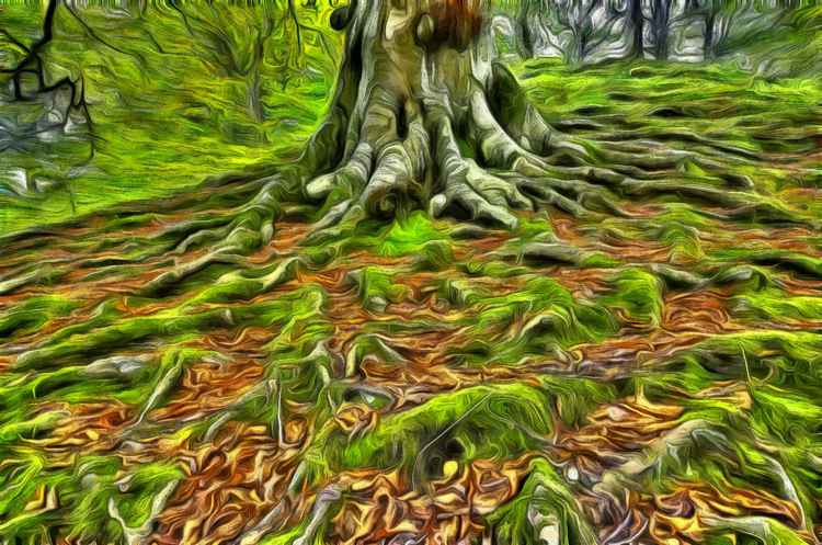 Bare Roots -