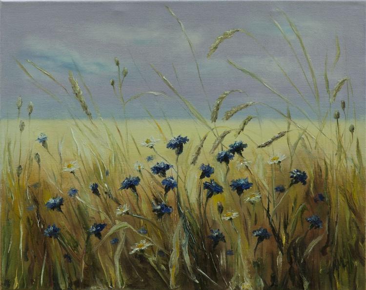 A field of cornflowers - Image 0